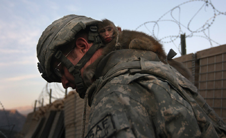 The question is...Does that soldier know there's a monkey attached to him? They are very sneaky!